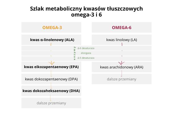 7 obszarów wspierania zdrowia przez omega-3